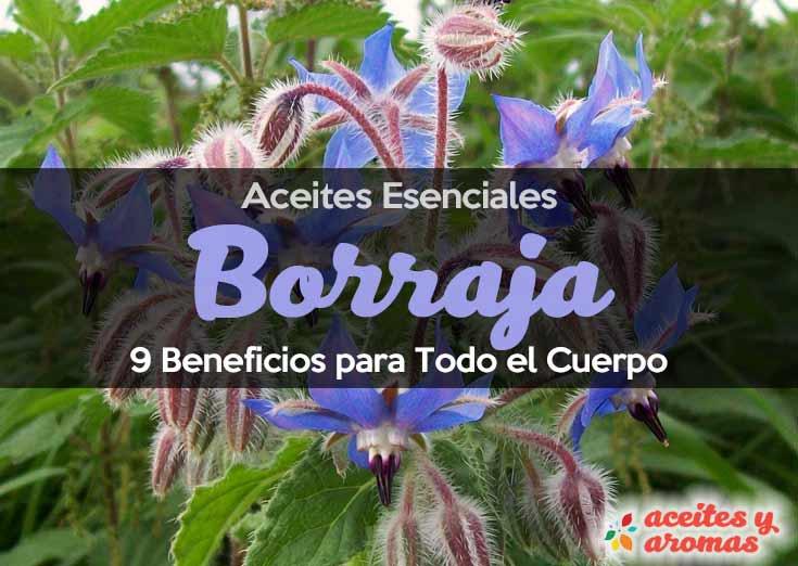 Aceite Esencial de Borraja: Usos y Beneficios