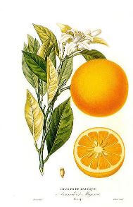Aceites citricos