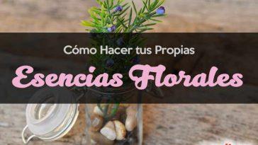 Cómo hacer esencias florales caseras